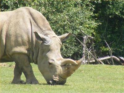 zoo camps coloring | Le Zoo de la Palmyre - Tourisme et loisirs en Gironde - Camping Les ...