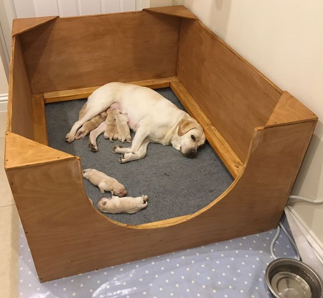 17 best ideas about whelping box on pinterest dog for Dog breeding kennel design