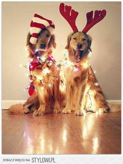 Reindeer pups
