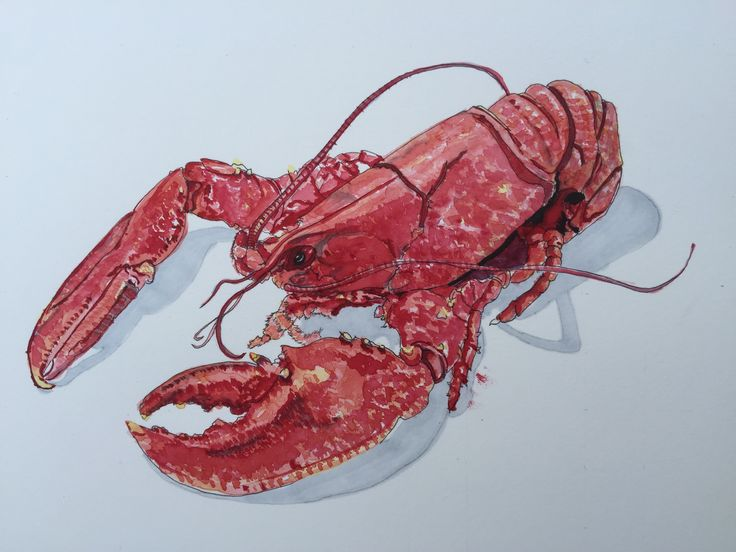 Lobster ink and watercolour on Daler Rowney The Langton 300gsm Hot Pressed