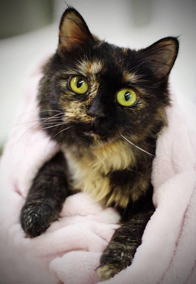 shell cat | Cute Cats