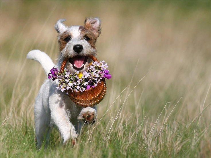 Cute, running puppy with flowers