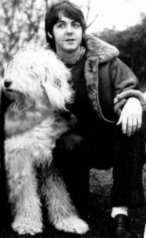 Paul McCartney and Martha. Old English Sheepdog art portraits, photographs, information and just plain fun. Also see how artist Kline draws his dog art from only words at drawDOGS.com #drawDOGS http://drawdogs.com/product/dog-art/old-english-sheepdog-dog-portrait-by-stephen-kline/ He also can add your dog's name into the lithograph.