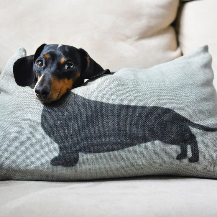 Dachshunds would be ideal dogs for small children...  they are already stretched and pulled to an awkward length.... how much more could a child inflict upon them...!!!