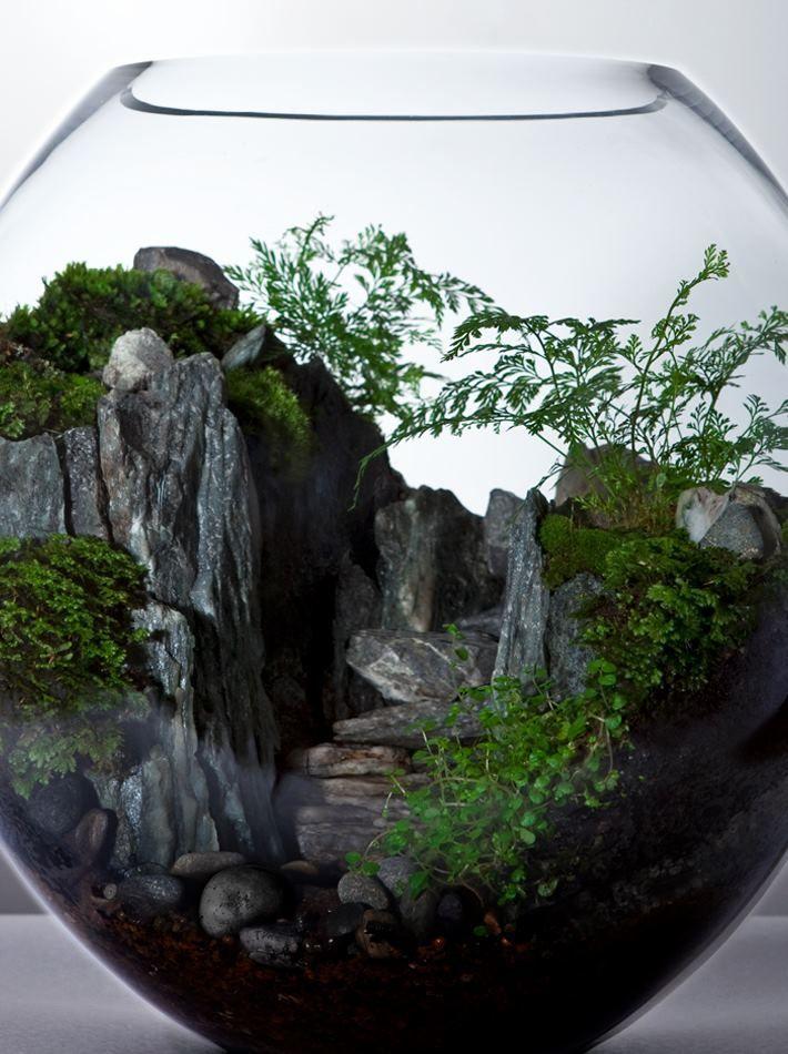 258 Best Plant Terrariums Images On Pinterest | Terrarium Ideas, Miniature  Gardens And Plants