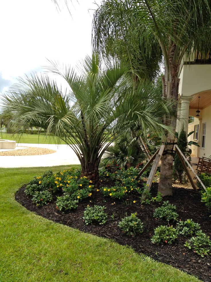 91 Best Images About Buy Cold Hardy Palm Trees On