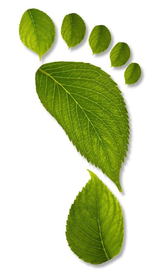 Las hojas representan texturas y siluetas para grafismos