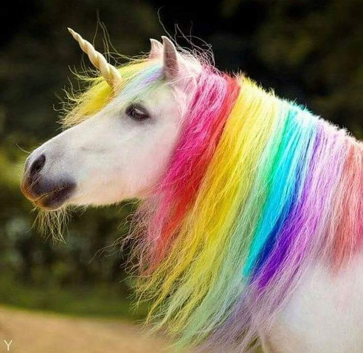 6705 Best UNICORNS Images On Pinterest
