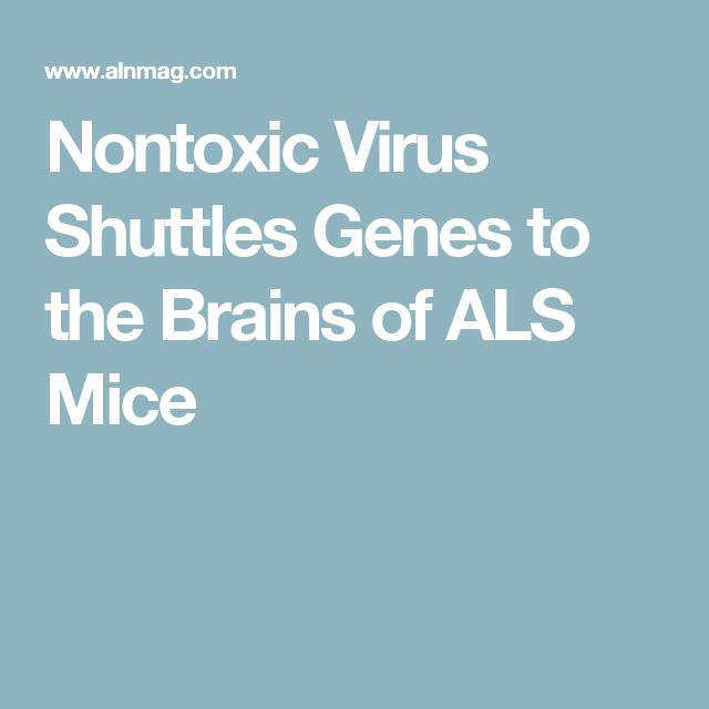 Nontoxic Virus Shuttles Genes to the Brains of ALS Mice