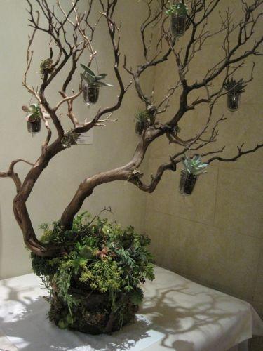 Hello There Mini Manzanita Trees Marry Me Please