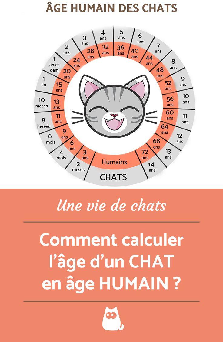 Comment Calculer L'âge D'un Chat : comment, calculer, l'âge, Calculer, L'ÂGE, HUMAIN, Comprendre, Chat,, Anecdotes, Amusantes