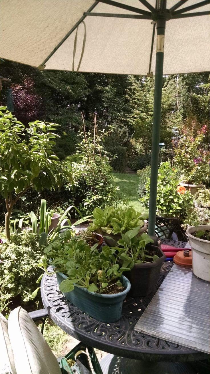 636 best vegetable u0026 herb gardening images on pinterest veggie