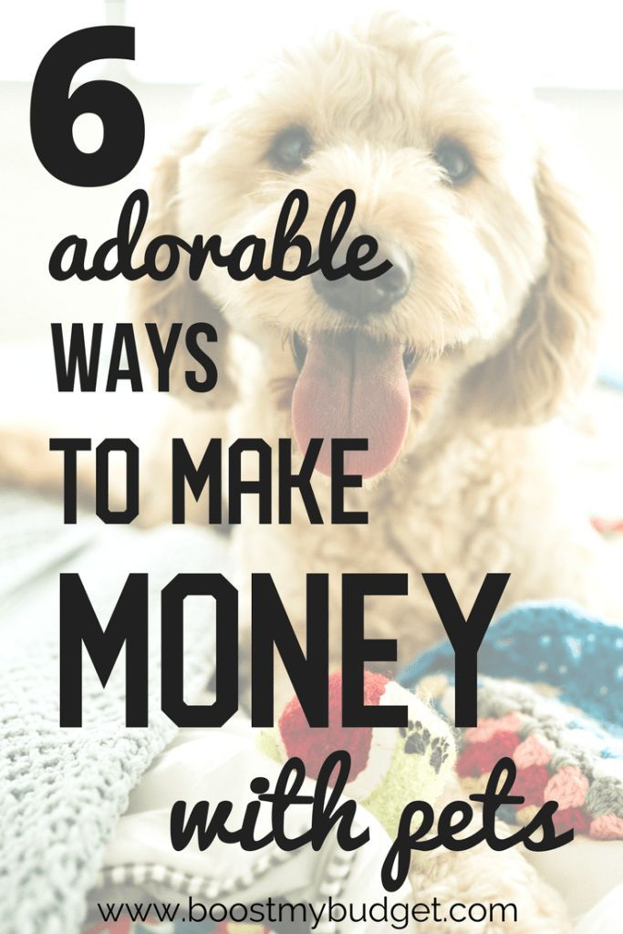 6 Adorable Ways To Make Money With Animals How To Make Money Way To Make Money Work From Home Jobs