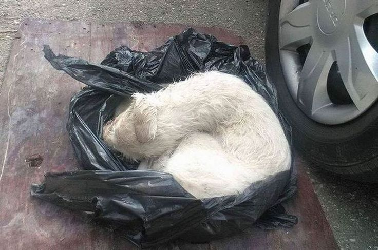 Щенок, пострадавший от человеческой жестокости http://kleinburd.ru/news/shhenok-postradavshij-ot-chelovecheskoj-zhestokosti/  Шрифт Твитнуть Будучи щенком, эта милейшая собака по кличке Анора едва не умерла из-за жестокого обращения с ней. Ее обнаружили в Румынии, завернутой в полиэтиленовый пакет. У животного была сломана лапа, на ее теле обнаружили большую рану, кроме того она имела травму головы. В придачу ко всему щенок был обезвожен и сильно изможден, а его […]