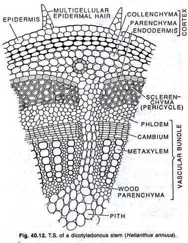 9 besten Botany Bilder auf Pinterest | Botanik, Anatomie und Biologie