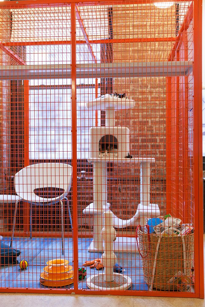 Animal Planet Pet Nation Renovation Shelter Makeover ...