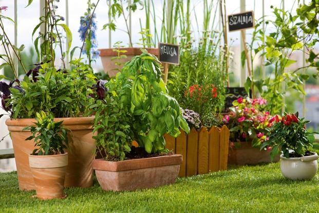 Rośliny balkonowe w doniczkach i nie tylko... ZDJĘCIA kwiatów na balkony i tarasy - - wymarzonyogrod.pl