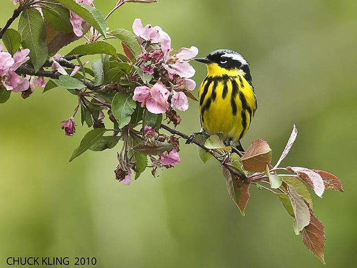 Each spring, significant numbers of warblers and other songbirds descend on this small forest in the heart of the city.By Jane Cormack.
