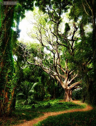 Maui >> Awesome, so magical, makes me want to explore!: Photos, Sanity Lost, Photo Contest, Maui Trees, Color Photo, Beautiful Place, Colorful Fish