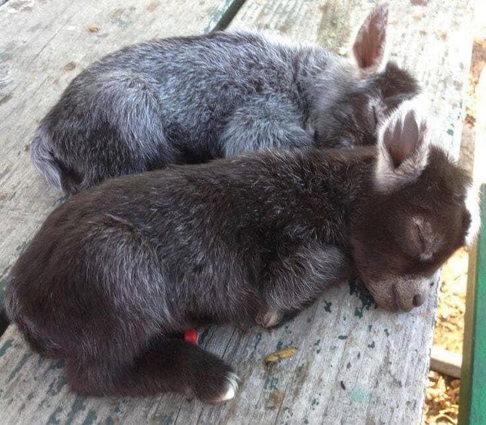 Not enough baby donkeys on here
