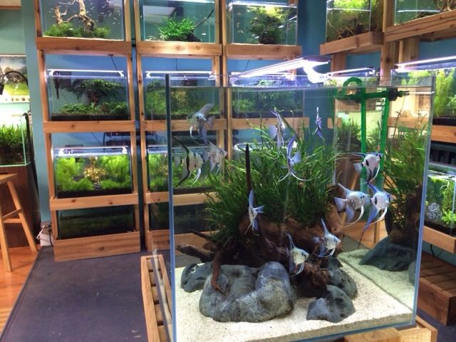 """kissmy-caudalpeduncle: """"More pictures of Aquarium Zen in Seattle Washington, owned and operated by my good friend Steve Waldron. Photos taken by fellow GSAS member Ryan Richardson. """""""