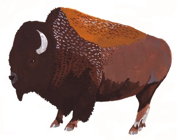 I LOVE buffaloes.  The way some people get all gooey about kittens is how I get about buffaloes.