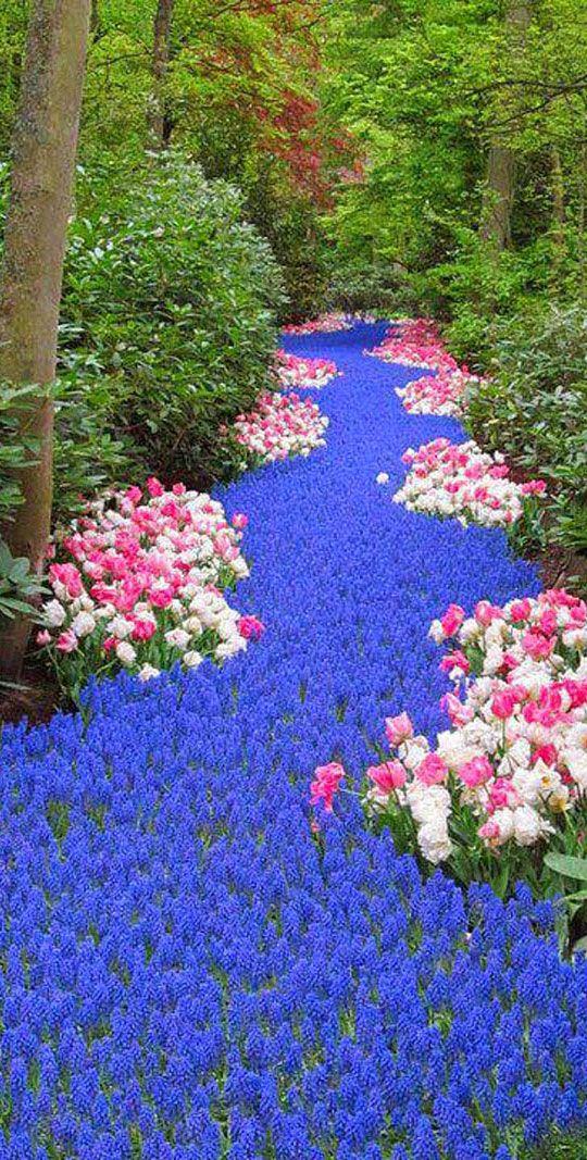 Keukenhof Gardens   Amsterdam | Netherlands