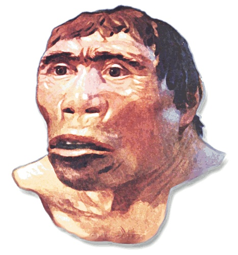 Java Man, from Indonesia, adds debate about human origination.