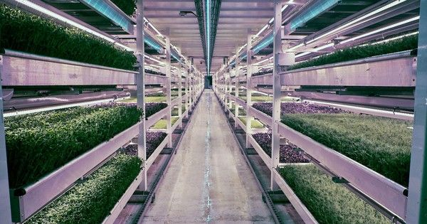 A hi-tech hydroponic farm is producing fresh, leafy greens right in the heart of London, 100 feet below ground.