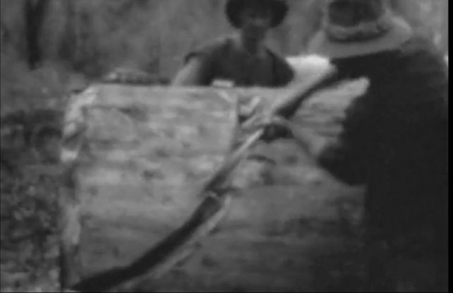 [Click to view film] Logging at Pemberton, 1929-32 : a Donald Smith film. More information on film content can be found on the SLWA Catalogue. http://encore.slwa.wa.gov.au/iii/encore/record/C__Rb1387647