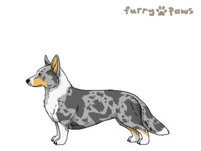 Furry Paws // WCFl Kip's Don't Wait [2STM ss 17HH 1.565] 13.1 *BoB*'s Kennel