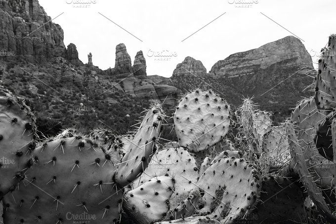 Black and White Cacti and Red Rocks by Girl North on @creativemarket