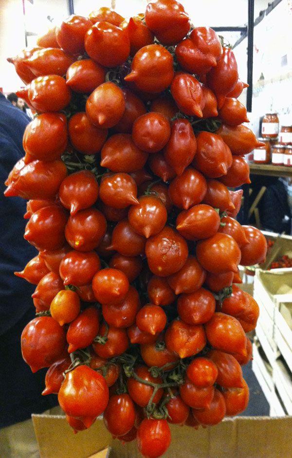 Pomodori del Pienolo