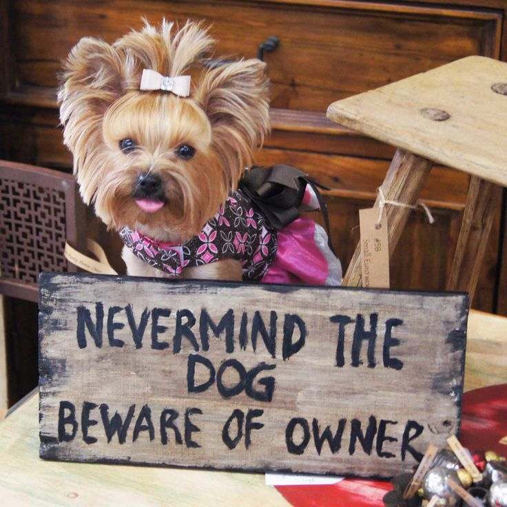 Nevermind the Dog, Beware of Owner