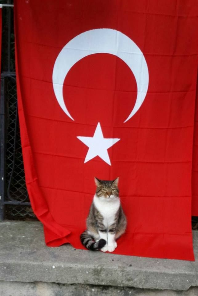 Turkish stray cat in Istanbul streets...certainly knows where to stand by... :)