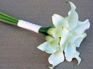 Calla - zantedeschia - Crystal Blush http://holmsundsblommor.blogspot.se/2013/08/vita-sma-callor.html 130817