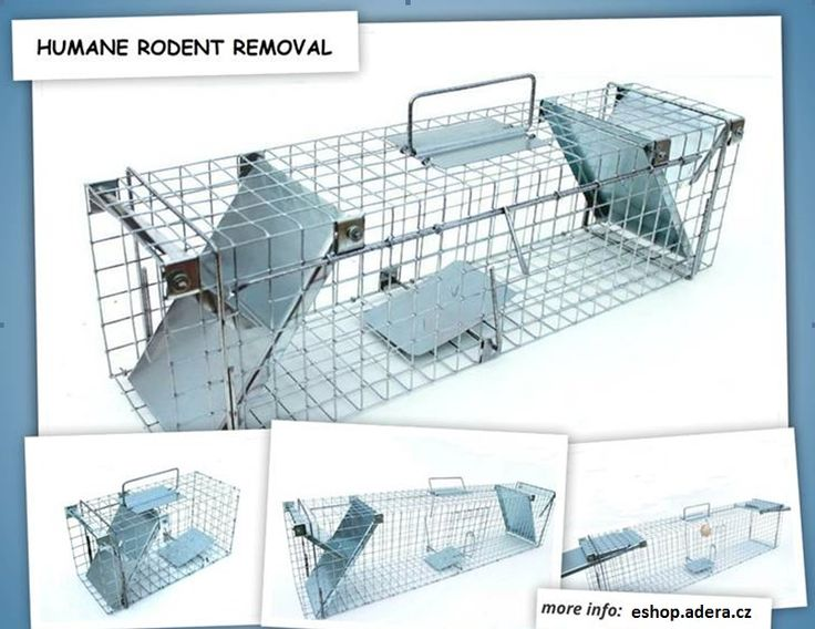 Animal cages for removing uninvited guests Sale and rental