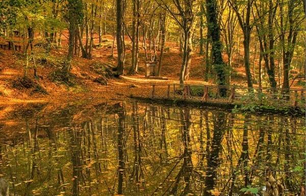 Milli parklar imara açılıyor! Belgrad Ormanı rezidans mı olacak?