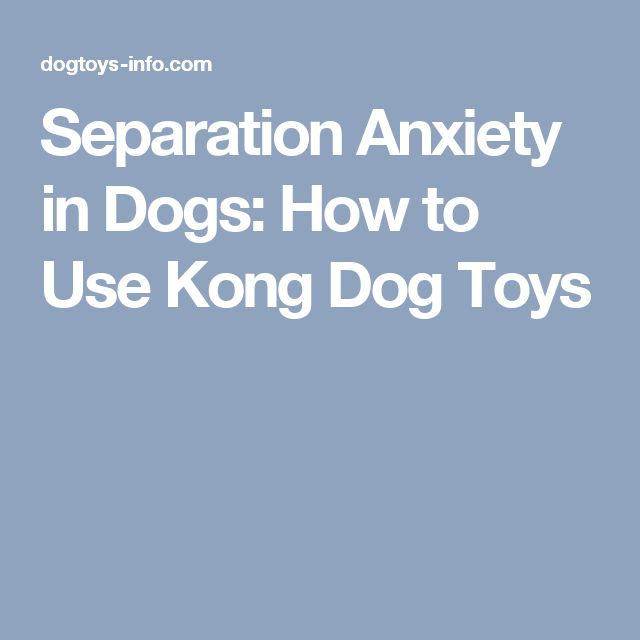 Separation Anxiety in Dogs: How to Use Kong Dog Toys