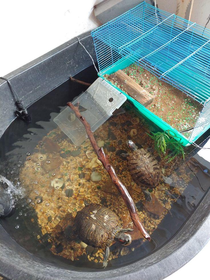 DIY turtle habitat Turtle habitat, Turtle aquarium