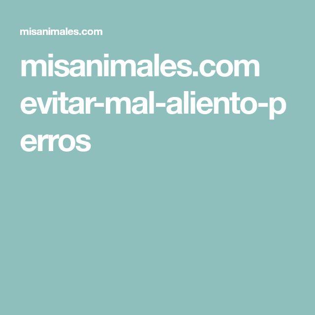 misanimales.com evitar-mal-aliento-perros