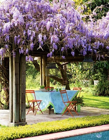 wisteria trellis for summer shade and winter sun