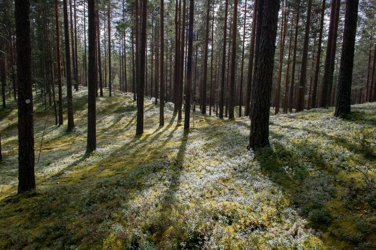 Rokua · Finland   iGNANT.de