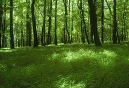 El shinrin-you o los baños de bosque #salud #seguromedico