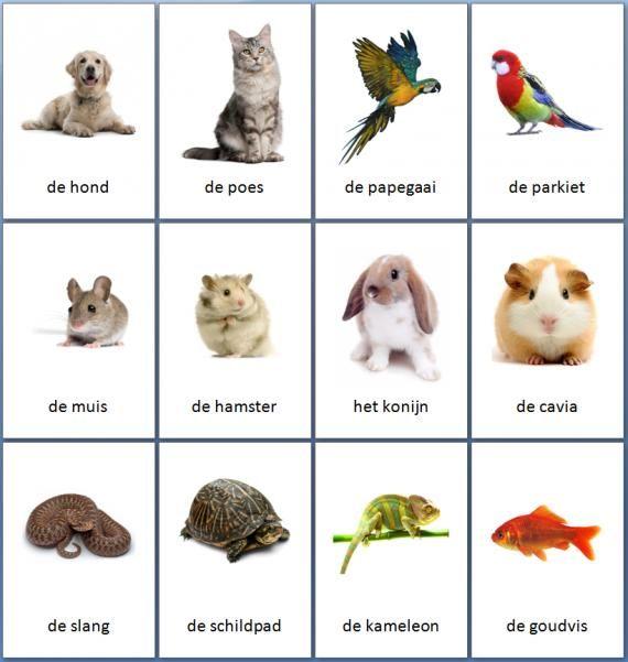 Grote themakaarten voor het thema huisdieren, we hebben voor vele thema's grote en kleine themakaarten op de website van Juf Milou.