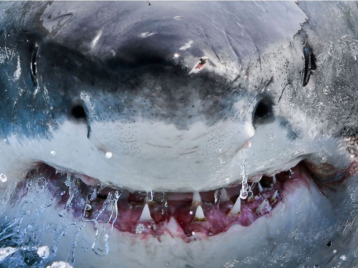Requins : les plus belles images