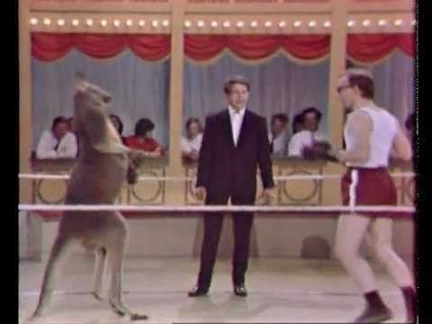 Woody Allen boxing with a Kangaroo