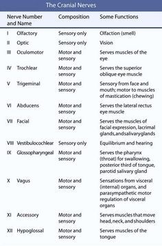 This chart lists the functions of the cranial nerves.