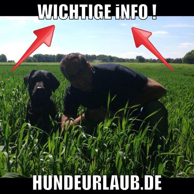 Nach der Abschaffung der Hundesteuer – jetzt kümmert sich ganz Holland um die Straßenhunde