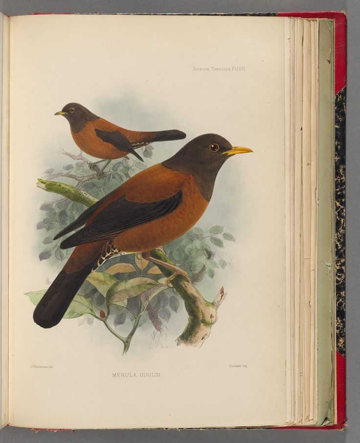 1902 - A monograph of the Turdidae, or, Family of thrushes by Henry Seebohm ; edited and completed (after the author's death) by R. Bowdler Sharpe